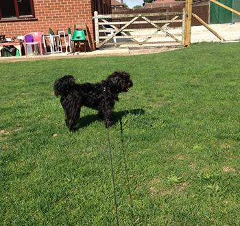Walkies in the outdoor grass paddock