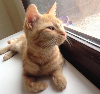 Cat Accommodation